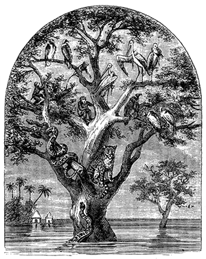 cz-animals-tree-flood-kingdom-1874-189-copy-x2